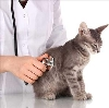 Ветеринарные клиники в Тасеево